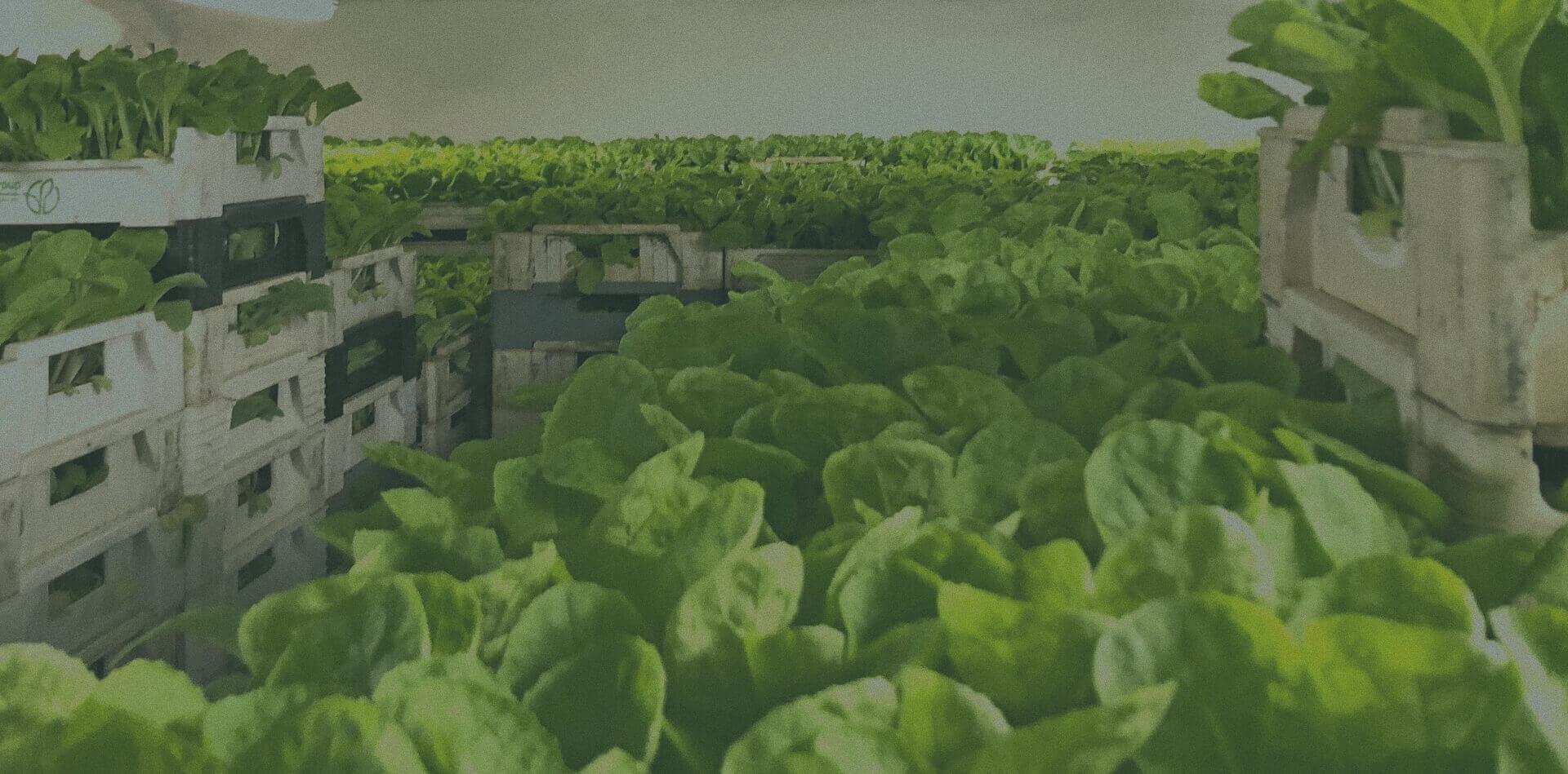 Kde koupíte naši zeleninu
